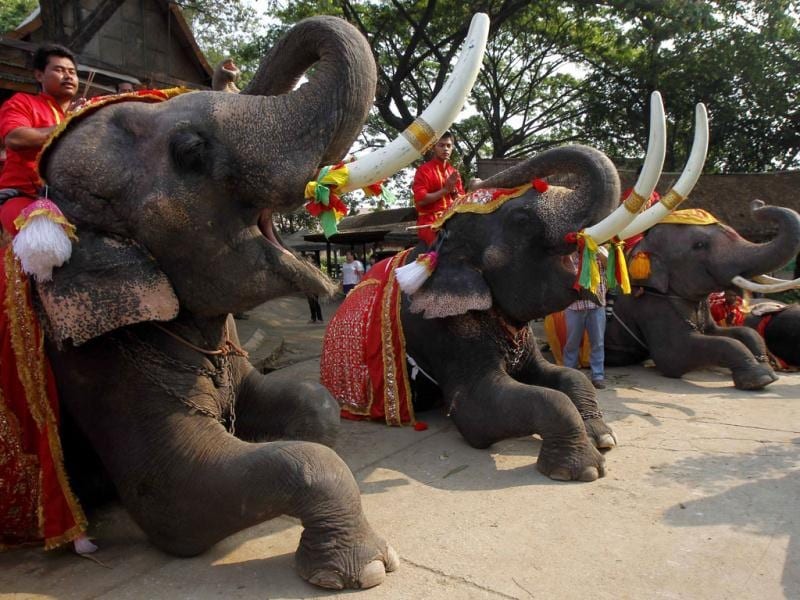 Mahouts pray while sitting on top of elephants during Thailand's National Elephant Day in the ancient Thai capital Ayutthaya. (Reuters Photo)