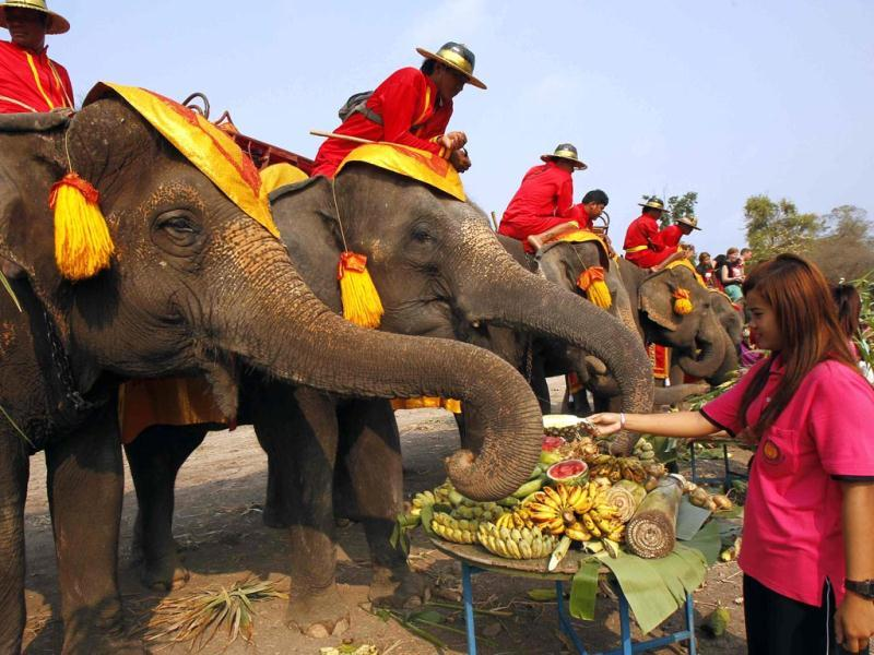 A student feeds fruit to an elephant during Thailand's National Elephant Day in the ancient Thai capital Ayutthaya. (Reuters Photo)