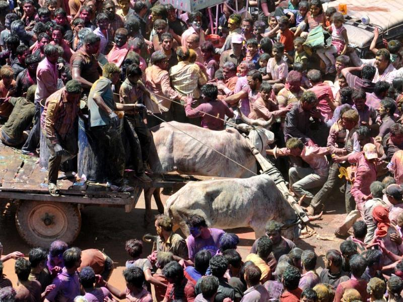 The two bullocks become hostile and start attacking the crowd during a procession. (Amit K Jaiswal/HT Photo)