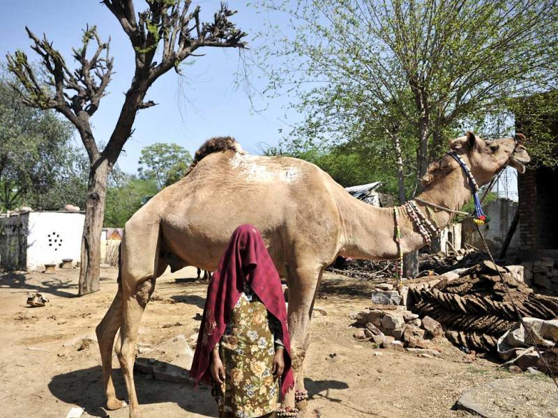 Married or not, paros are never treated at par with the natives of the region. (Subrata Biswas/HT Photo)