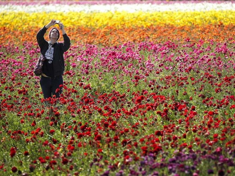 Emily Herren takes a picture with her phone as she visits the Flower Fields in Carlsbad, California. (AP Photo)
