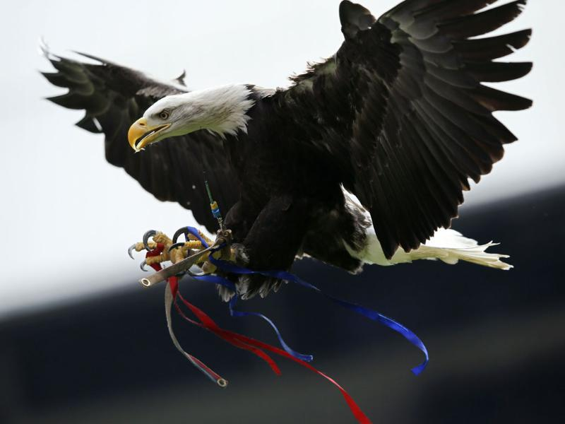 Crystal Palace's mascot, a North American bald eagle known as Kayla, flies before the start of the English Premier League football match between Crystal Palace and Manchester City at Selhurst Park in south London. AFP PHOTO
