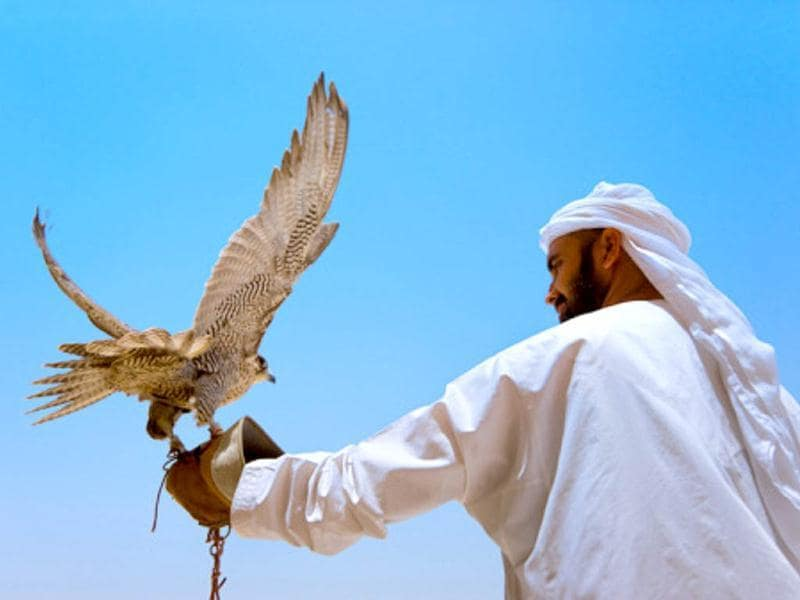 Falcons have played an integral part of desert life and have been used in UAE for centuries. Falconry is an adventure/entertainment option today but in the past falcons were used in hunting. (Getty)