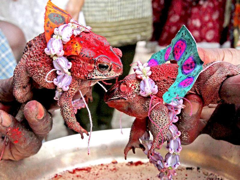A priest conducting marriage of frogs for rains at Debgram village in Birbhum district of West Bengal. (PTI Photo)