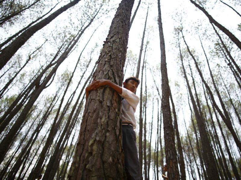 A boy hugs a tree as he takes part in an attempt to break the Guinness World Record for the most number of people hugging trees for two minutes in Kathmandu. According to the event organiser, 2,001 people took part in the event, held on World Environment Day, to spread the message of saving the environment. (Reuters)