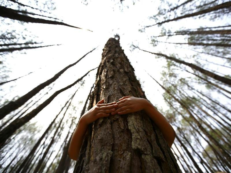 A boy hugs a tree as he prepares to take part in an attempt to break the Guinness World Record for the most number of people hugging trees for two minutes in Kathmandu on June 5, 2014. According to the event organiser, 2,001 people took part in the event, held on World Environment Day, to spread the message of saving the environment. (Reuters)