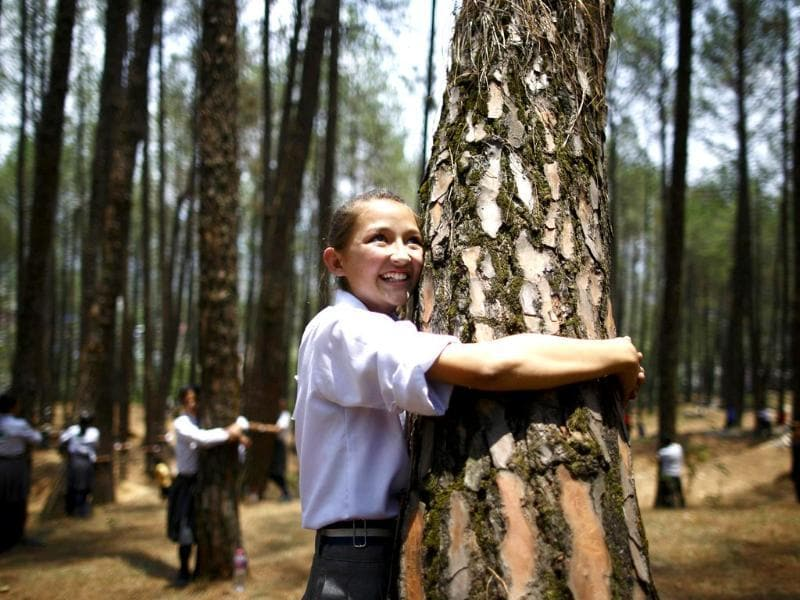 A girl hugs a tree as she takes part in an attempt to break the Guinness World Record for the most number of people hugging trees for two minutes in Kathmandu June 5, 2014. According to the event organiser, 2,001 people took part in the event, held on World Environment Day, to spread the message of saving the environment. (Reuters)