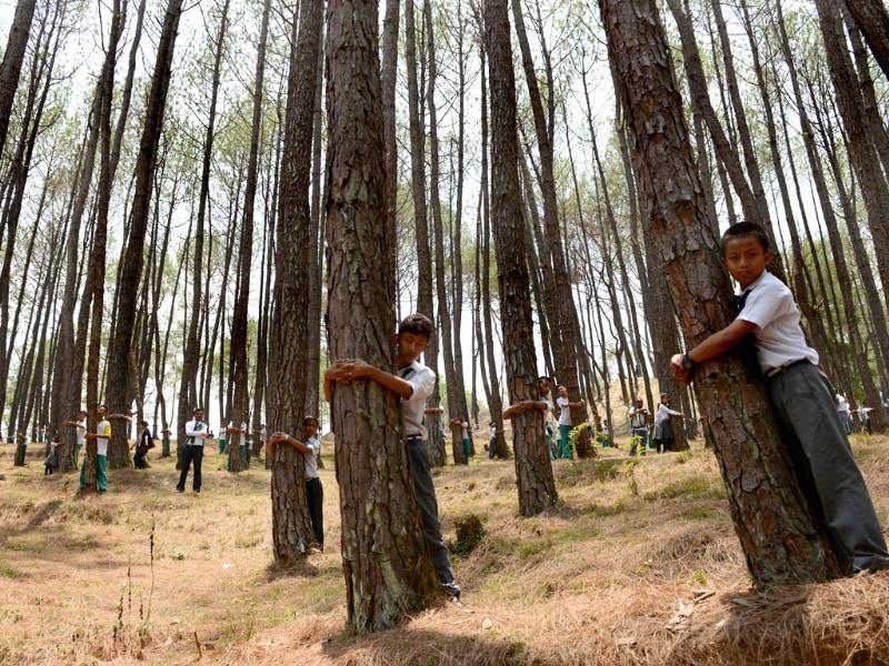 Nepalese school children hug trees in a bid to set a new world record for the largest tree hug as they celebrate World Environment Day in the forest of Gokarna village, on the outskirts of Kathmandu on June 5, 2014. (AFP Photo)