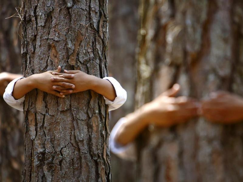 Hands hugging trees are pictured as participants take part in an attempt to break the Guinness World Record for the most number of people hugging trees for two minutes in Kathmandu June 5, 2014. According to the event organiser, 2,001 people took part in the event, held on World Environment Day, to spread the message of saving the environment. (Reuters)