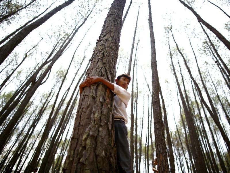 A boy hugs a tree as he takes part in an attempt to break the Guinness World Record for the most number of people hugging trees for two minutes in Kathmandu June 5, 2014.(Reuters)