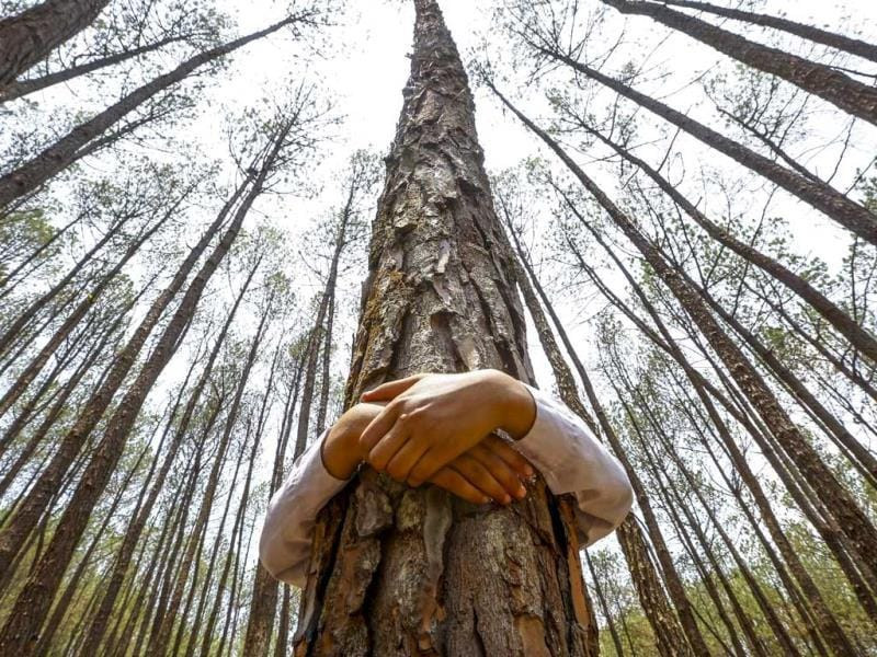 A Nepalese pupil hugs a tree while celebrating World Environment Day at the forest of Gokarna, on the outskirt of capital Kathmandu, Nepal. (EPA Photo)
