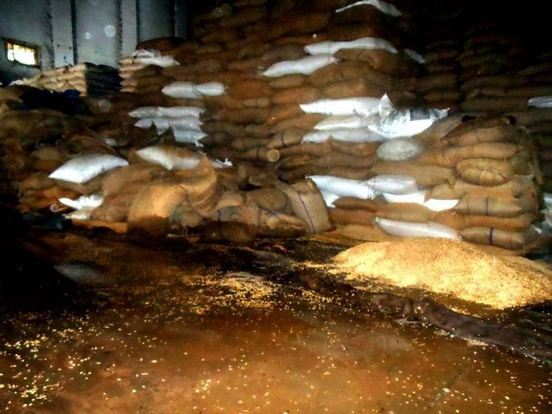 Sacks of wheat stored in a warehouse in Ramnagar are drenched by rain water. (HT Photo)