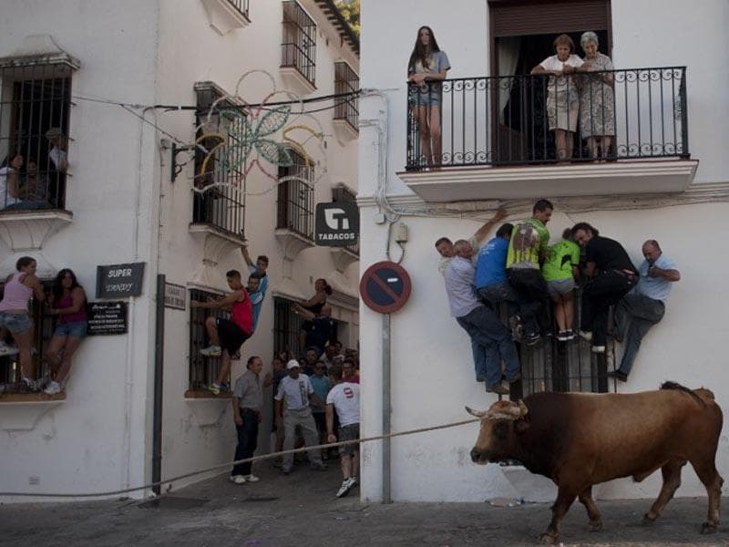 Spain, Grazalema:  People climb onto window ledges to try to avoid a bull during the bull rope festival through the streets of Grazalema on July 21, 2014. (AFP/Jorge Guerrero)