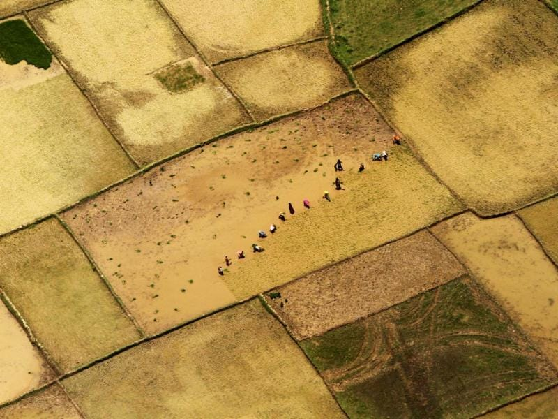 This aerial view shows Indian farmers replanting paddy saplings at a rice field after monsoon rains on the outskirts of Bhubaneswar. (AP Photo)