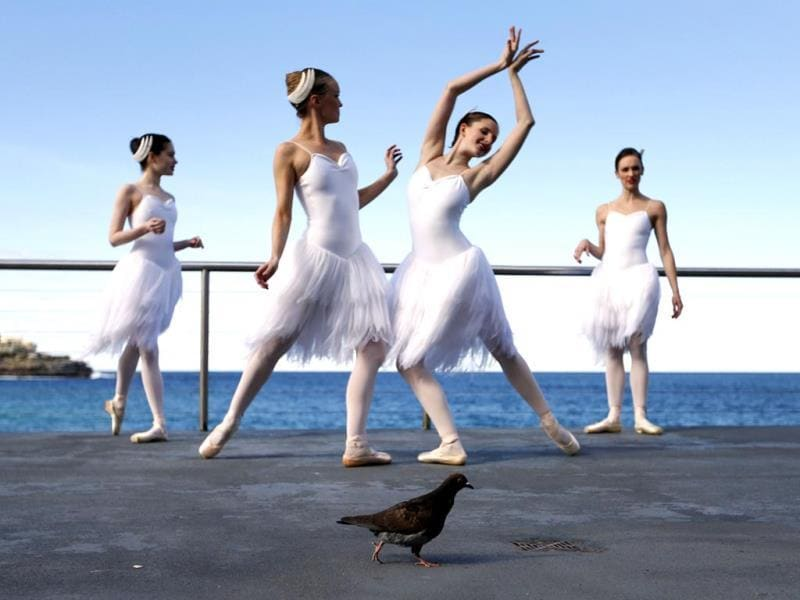 A pigeon walks among dancers from the Australian Ballet pictured during a photocall at the Bondi Icebergs oceanside pool in Sydney. (Reuters/Jason Reed)