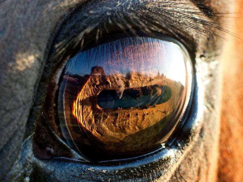 The eye of a horse as seen in the light of the rising sun in Sehnde near Hanover, central Germany. (AFP Photo)