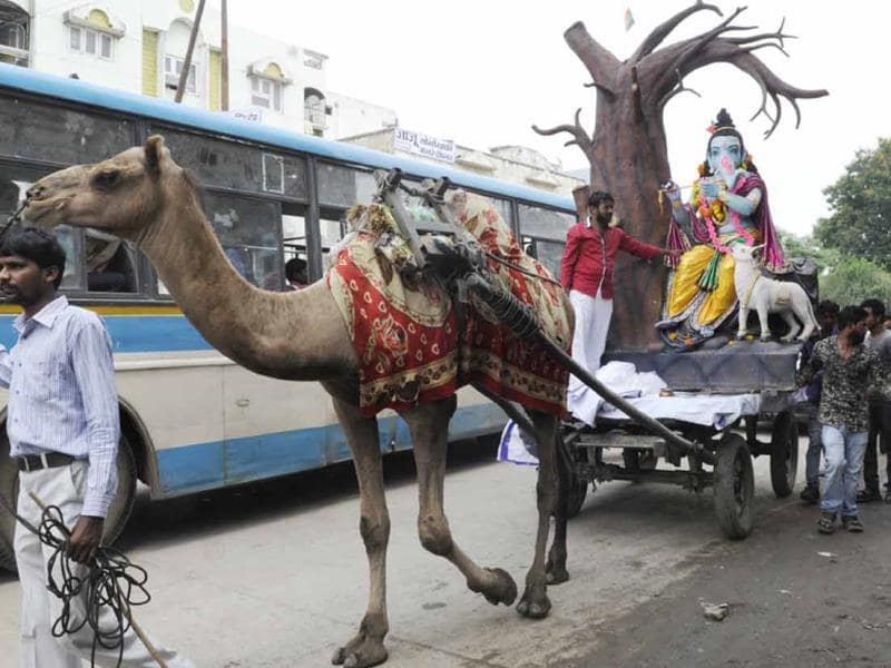Ganesh takes a camel ride! An idol of Ganesh being carried on a camel cart in Indore on Friday. (Amit K Jaiswal/HT photo)