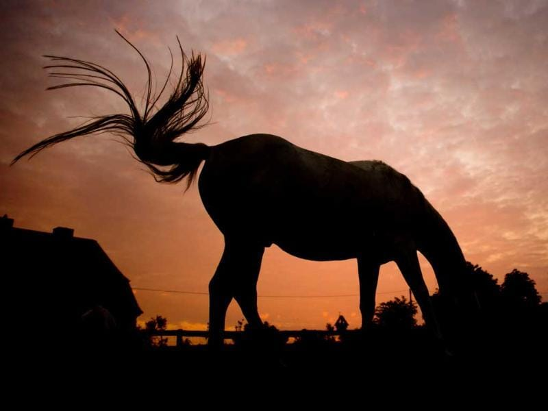 The silhouette of a grazing horse stands on a meadow against the sky during sunrise near Sehnde, northern Germany. (AP Photo)