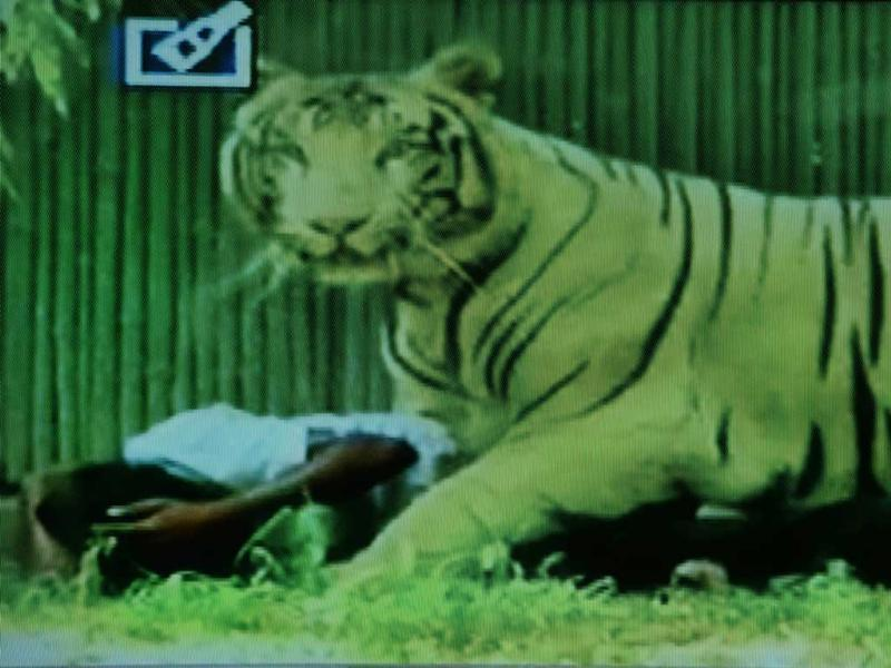 A television frame grab from Headlines Today, where a white tiger mauled a schoolboy at Delhi Zoo on Tuesday. (AFP Photo)