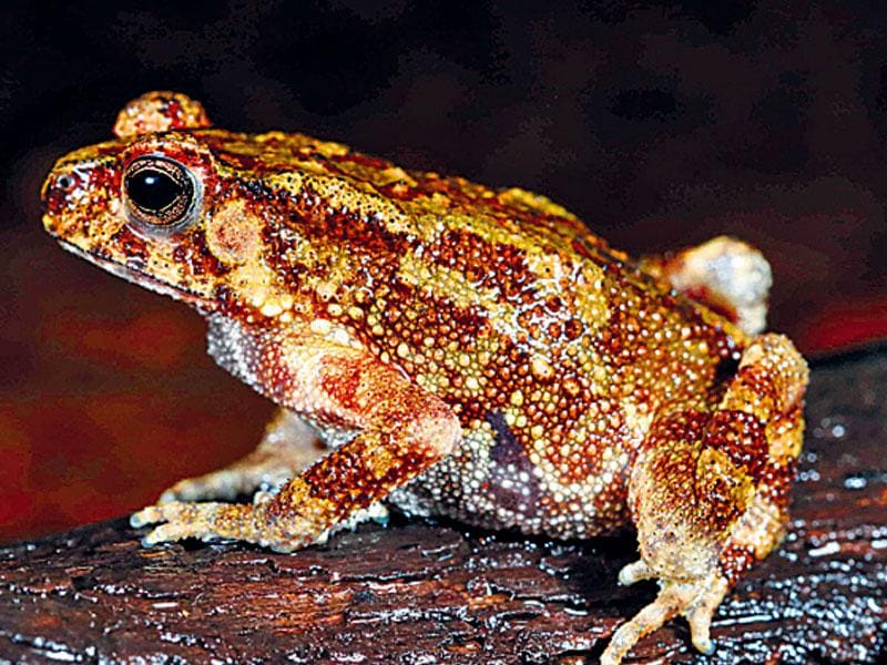 Next on the agenda is a film capturing the lives of these frogs and the urgent need for their protection.