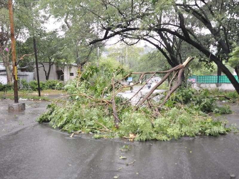 Broken branch of a tree lies on the road near 45 Bungalows in Bhopal on Saturday evening after heavy rain lashed the city. (Praveen Bajpai/HT photo)