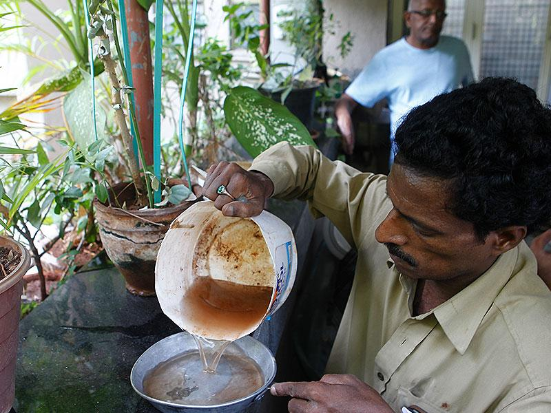 The BMC staff identify, treat and eliminate breeding of dengue transmitting Aedes mosquitoes which spreads the dengue infection among humans. (Satish Bate/HT photo)