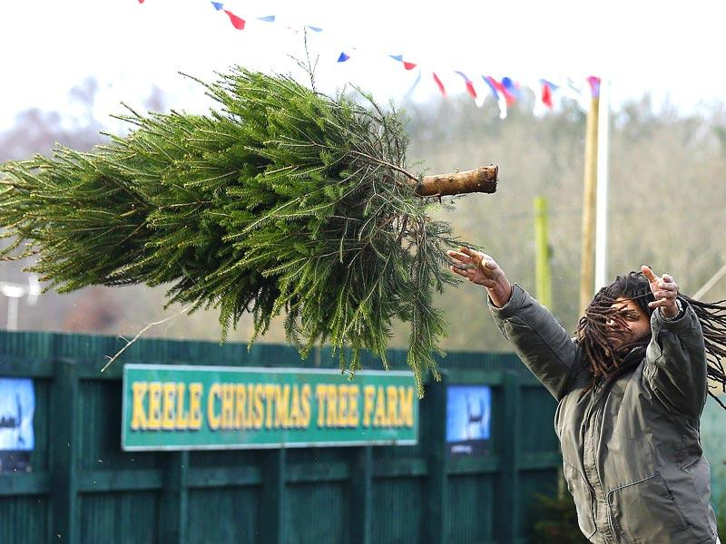 A competitor during the UK Christmas Tree Throwing Championships in Keele, central England.(Reuters Photo)