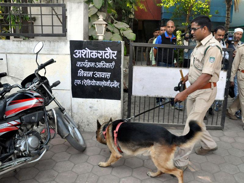 A dog hunts for a missing 'leopard' at Radio Colony in Indore on Wednesday. (Arun Mondhe/HT photo)