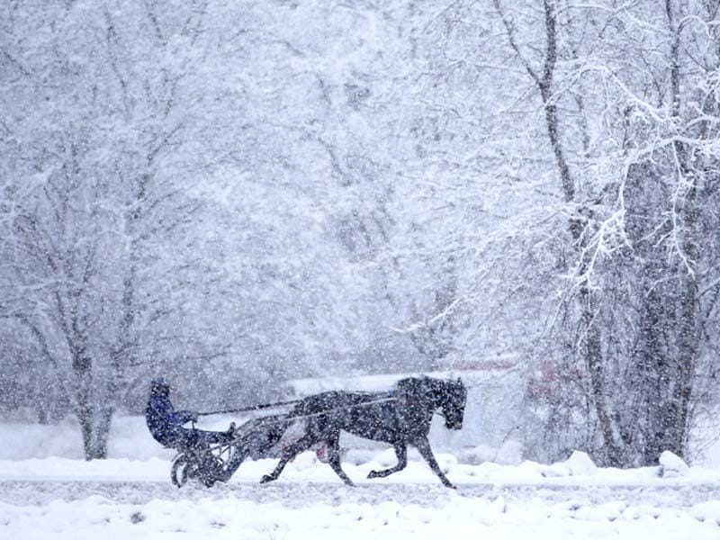 A horse and driver take a lap on a snowy morning during training on the harness track at Saratoga Casino and Raceway . (AP Photo/Mike Groll)