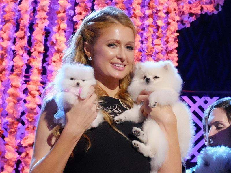 Paris Hilton accompanied by her Pomeranian dogs and her newest pup Princess Paris Jr. poses for pictures after the taping of the 2015 World Dog Awards at the Barker Hanger in Santa Monica, Calif on Saturday, Jan. 10, 2015. Awards season in Hollywood has begun. For at least one show, though, there will be no