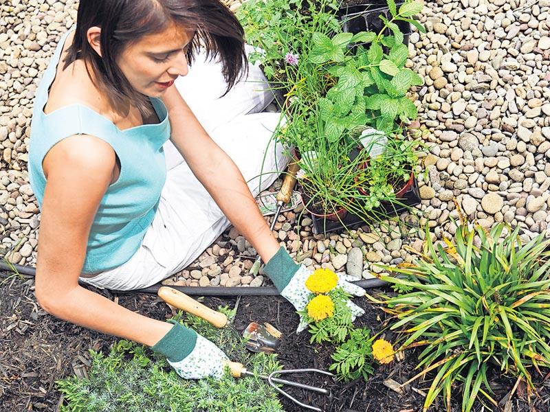 Sow good: Tips to build your own kitchen garden   Hindustan Times