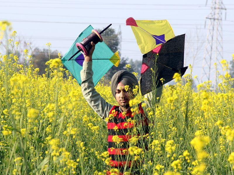 A boy crossing mustard fields at Bathinda on Monday. Sanjeev Kumar/HT