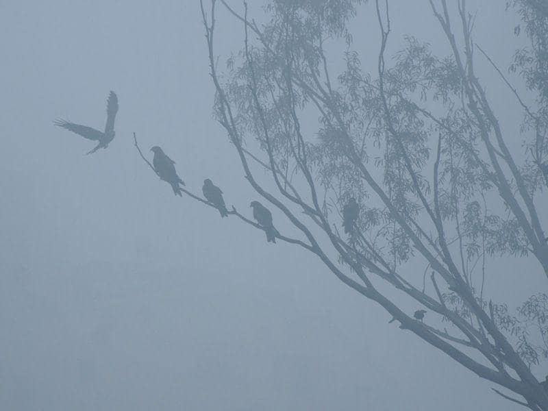 Birds perching upon a tree in a foggy morning in Patiala on Monday. Bharat Bhushan/HT