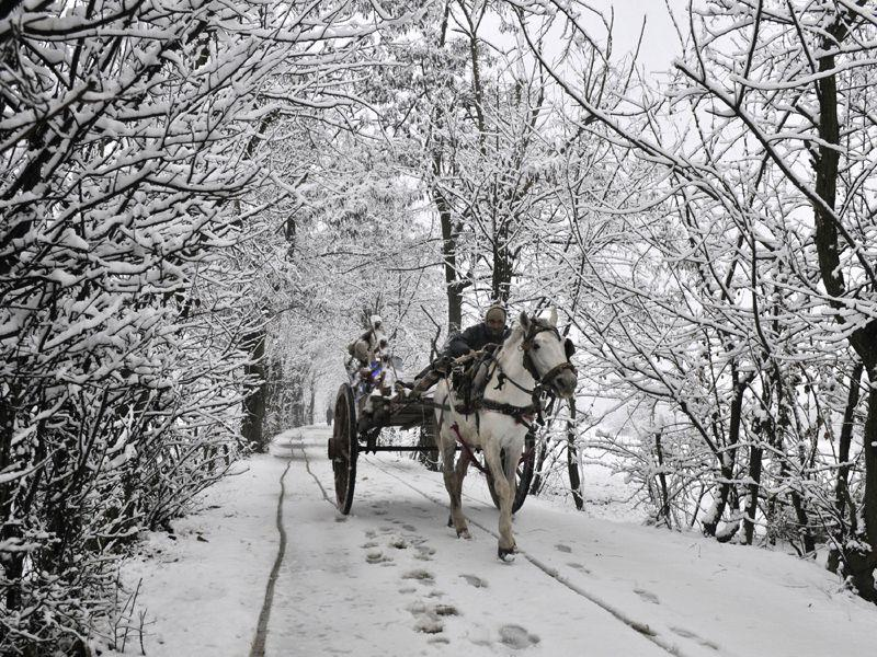 A horse cart moves on the road covered with snow in Srinagar. Waseem Andrabi/ HT
