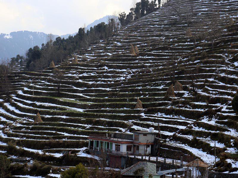 Fresh snowfall in Seraj area of Mandi on Monday. Birbal Sharma/HT