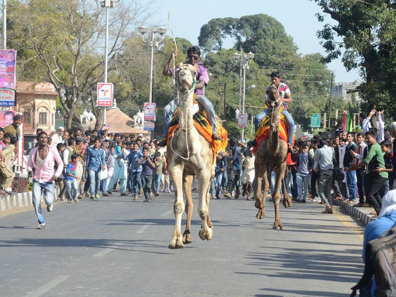 People take part in a camel race organised at VIP Road in Bhopal on Saturday. (Praveen Bajpai/HT photo)