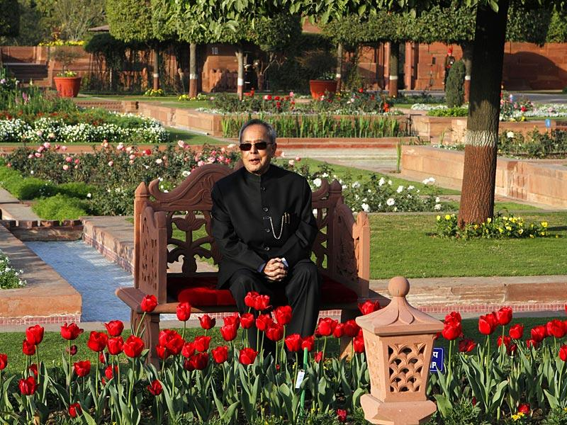 Tulips, an inseparable part of Kashmir's beauty, are a favourite of President Pranab Mukherjee who came out to Mughal Gardens for the first time this season. (Virendra Singh Gosain/HT Photo)