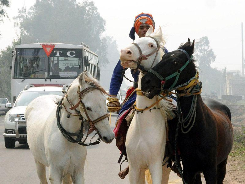 Preparing for Holla mohalla, a young Nihang Singh while taking ride along with his three horse in Patiala Bharat Bhushan/HT