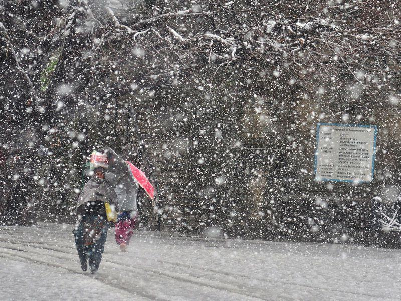 A woman walking in snow in Shimla. The MET department said that western disturbances would be active again in the region till Tuesday and could lead to heavy snow and rain. Santosh Rawat/HT