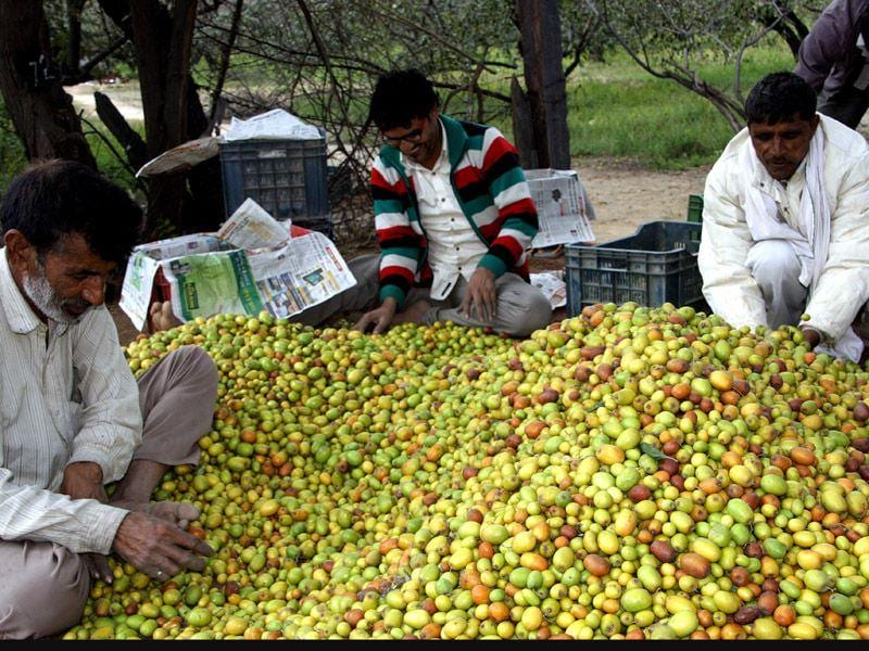 A roadside vendor selling jujube 'Ber' on Rohtak-Jhajjar road. Manoj Dhakha/HT