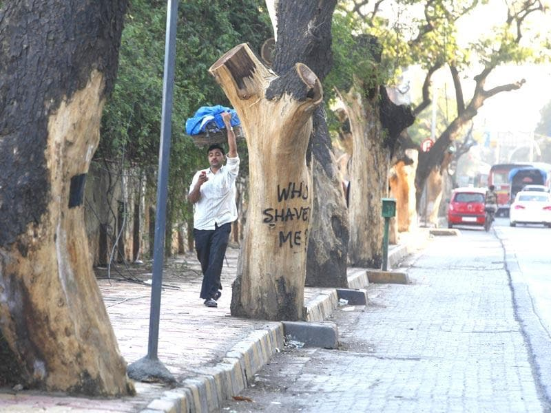Walk past the DN Nagar stretch in Andheri and you will see trees chopped and shaved. Walk along the road, you will find this interesting message: 'Who shaved me?', as if the trees are asking for a justification for such a ruthless action. (Vidya Subramanian/HT photo)