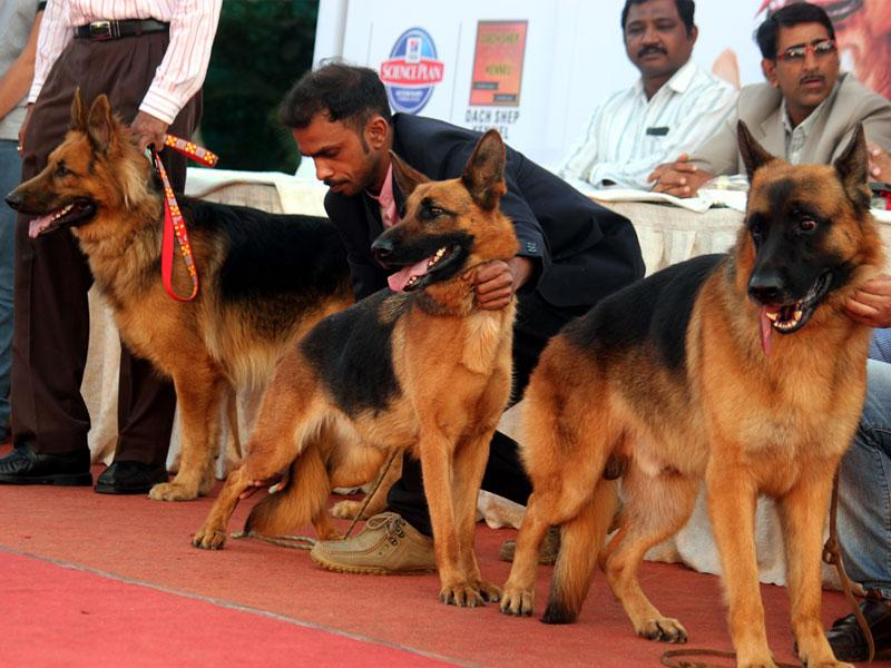 Dogs kept the crowds enthralled at a dog show where they arrived with their owners, in Indore on Sunday. (Shankar Mourya/HT photo)
