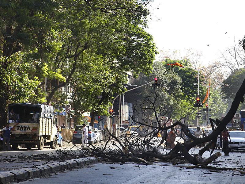 A dead tree was cut down at Gokhale Road in Dadar, Mumbai. (Kalpak Pathak/HT photo)