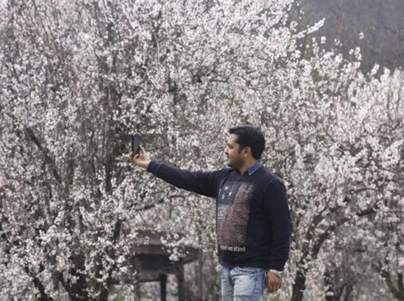 A youth clicks selfie with almond bloom in the backdrop in Srinagar. Waseem Andrabi/HT