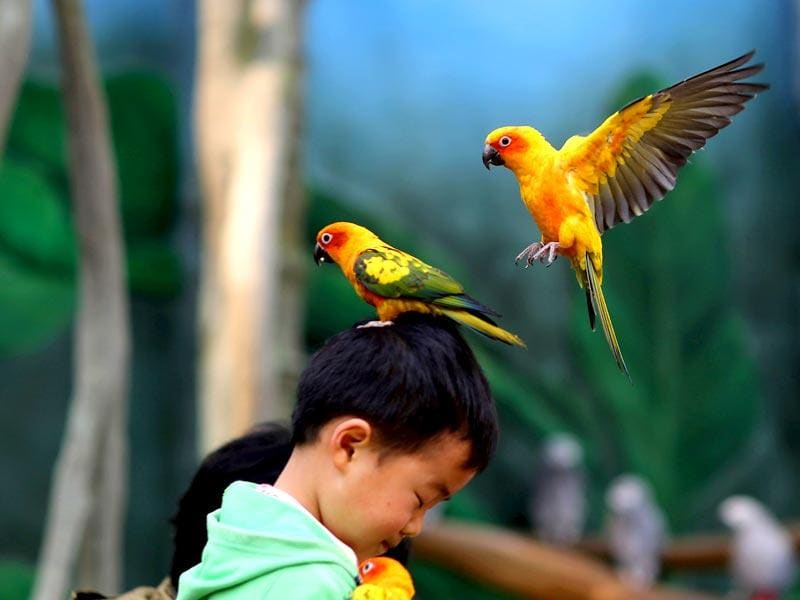 Kunming, China: This picture taken on March 21 shows a parrot standing on the head of a child in the Kunming Zoo in Kunming, southwest China's Yunnan province.