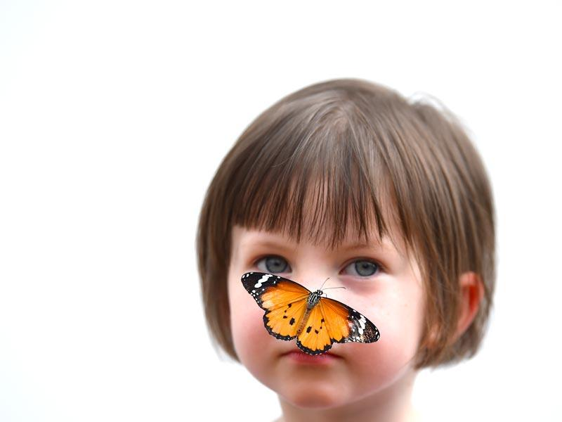London: A Tiger butterfly sits on the nose of a child during a photocall in the Natural History Museum's 'Sensational Butterflies' outdoor butterfly house in London on March 31.