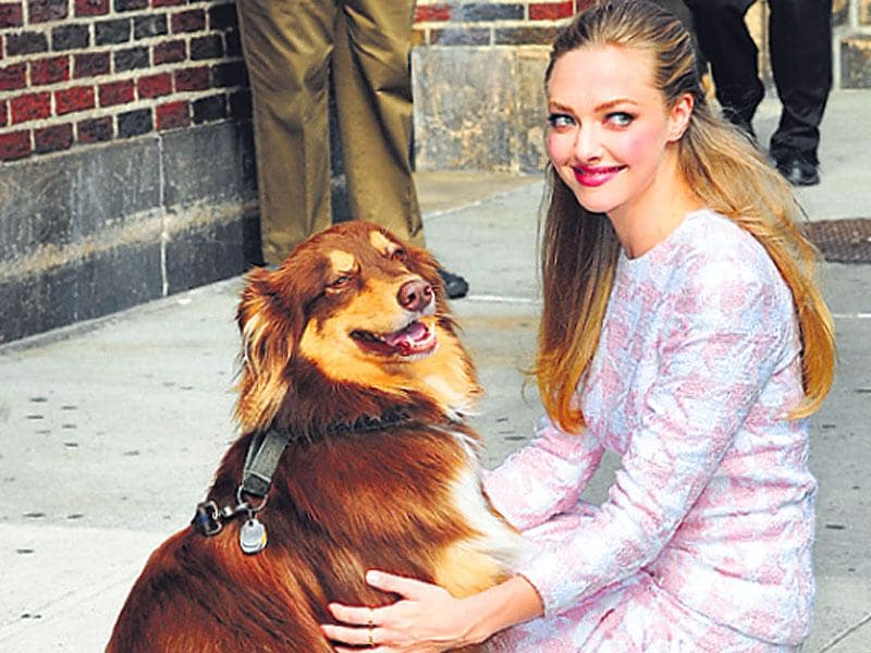 Amanda Seyfried with her Australian Shepherd Finn.