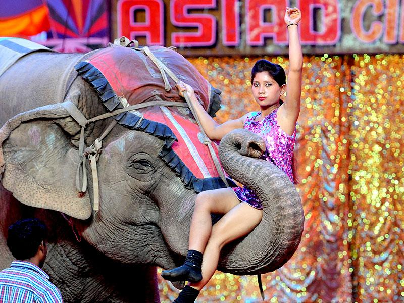 An elephant entwines a girl in its trunk at the Asiad circus in Manimajra. (HT Photo)