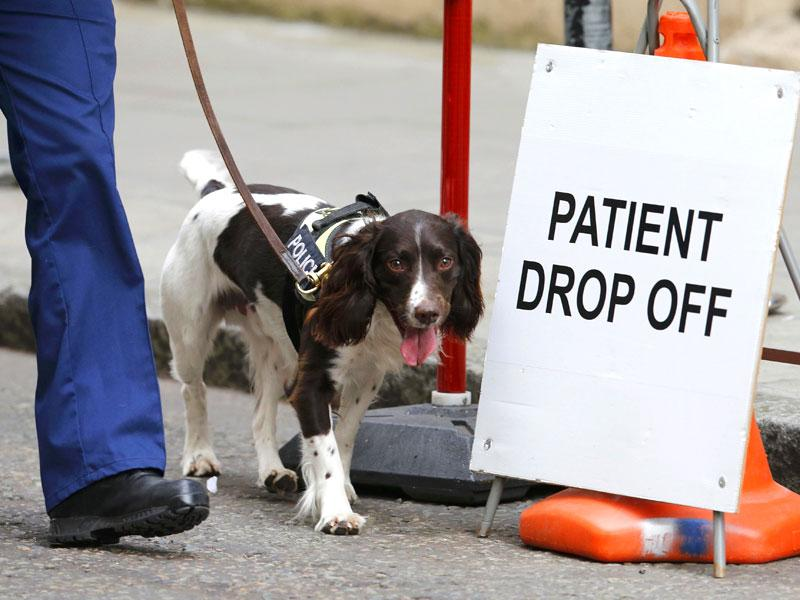 A police sniffer dog patrols outside the Lindo wing of St Mary's Hospital. (Reuters)