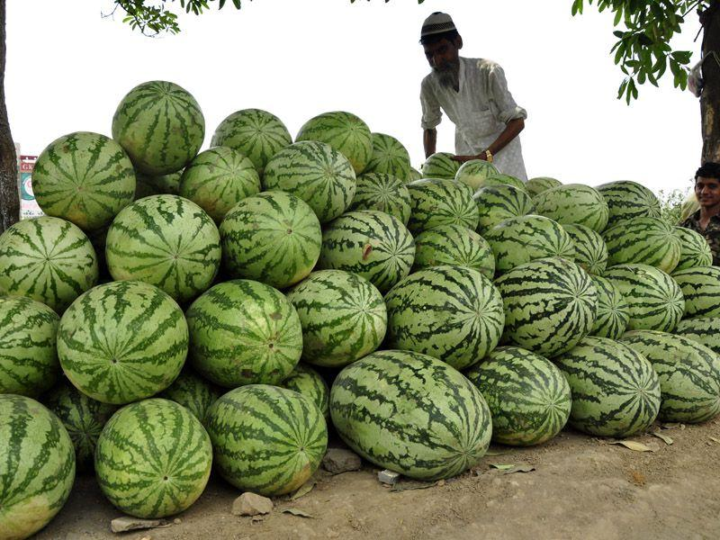 Street vendor selling watermelons in Ludhiana on Thursday. Sikander Singh Chopra/HT